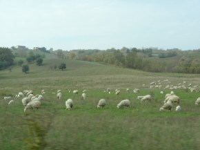 Italian Countryside 1