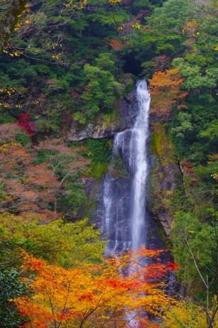 Sendan-Todoro Autumn