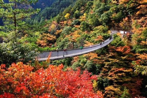 Umenoki-Todoro suspension bridge Autumn view