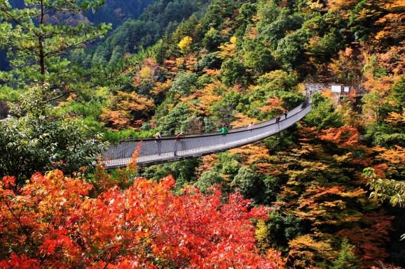Umenoki-Todoro suspension bridge Autumn view