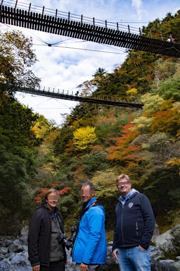 Momigi's suspension bridges