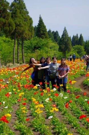 Field poppies at Kuju flower park