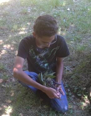 Phillip examines nitrogen nodules on a specimen from the garden.