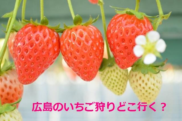 広島のいちご狩りおすすめ人気園