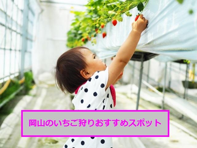 イチゴ狩り岡山の人気おすすめ6園