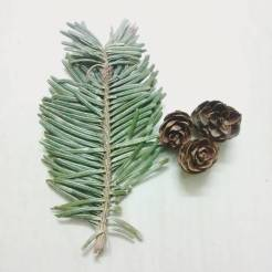 My souvenir, Pine leaves and flowers