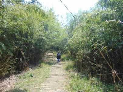 Trekking through the bamboo forest. PC : Upma