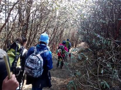 Trekking through Rhododendron forest