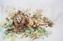 A Fine Lion (Lion)