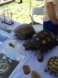 Love those desert tortoises