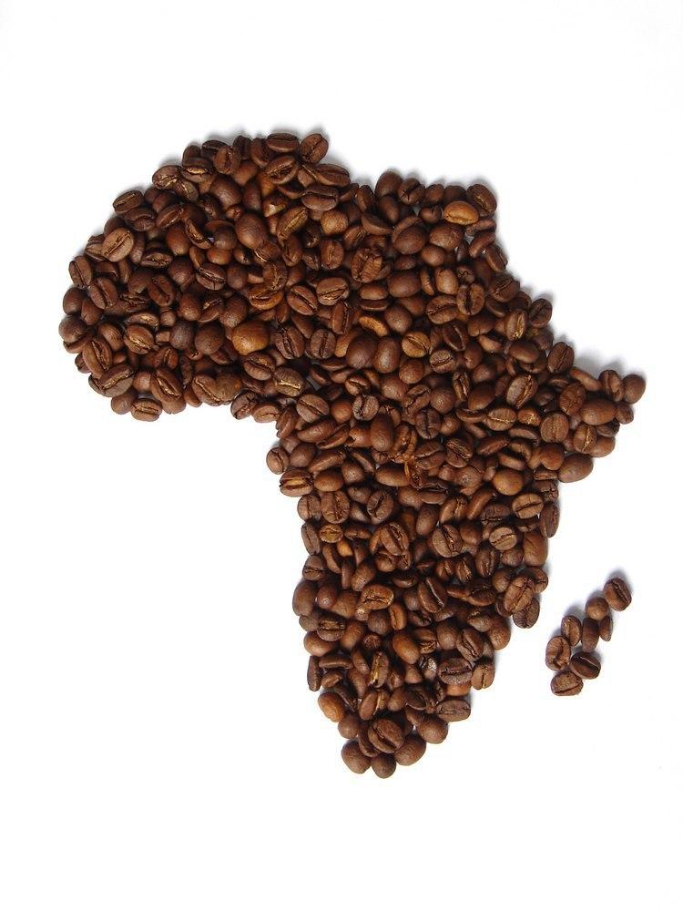 Сорта кофе. Африка.