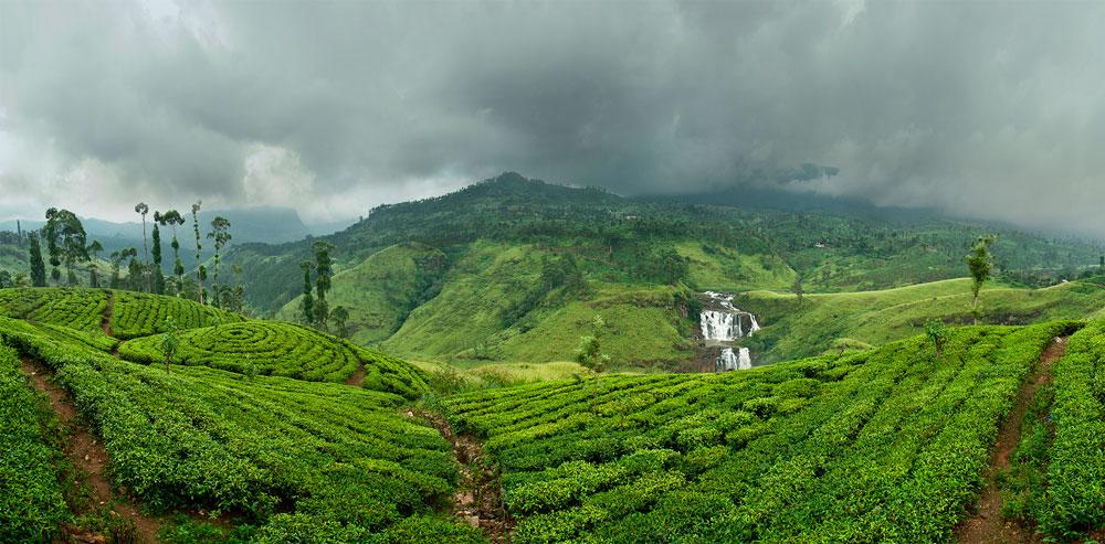 Чайные плантации Цейлона. Дампахала. Регион Рухуна.