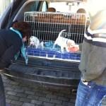 I-Wurf Icebreaker neues Zuhause Gelsenkirchen 03