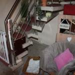 J-Wurf Jackson neues Zuhause in Bünde 03