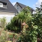 J-Wurf Jackson neues Zuhause in Bünde 12
