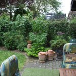 K-Wurf Knight Kliff neues Zuhause in Erkelenz 07