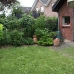 K-Wurf Knight Kliff neues Zuhause in Erkelenz 12