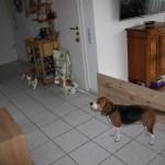 L-Wurf Lovely neues Zuhause Baunatal 09