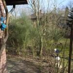 L-Wurf Lover neues Zuhause in Eickeloh 08