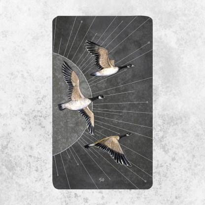 Birds Oracle Deck 2 | Golden Blue