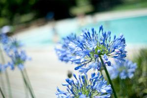 blog-images-woman-blue-flower
