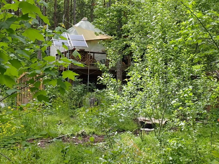off-grid dwelling viewed through forest garden.  Energy, food, water, and beautiful experiences can all be sourced from the land.