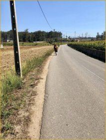 Buen Camino Santiago de Compostelle (35)
