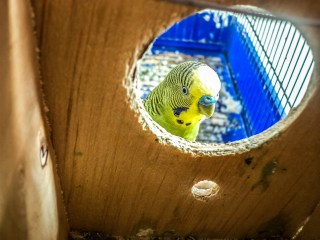 parrot in bird house