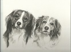 Toni and Nelleke drawn in pencil from photograph of two beautiful kooikers.