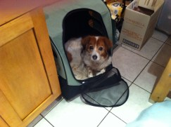 Nelleke is sitting in her hiking back pack.