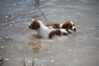 Luke and Finn in the water. Photo courtesy of Henna Palmunen.