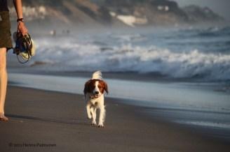 Amica at Santa Cruz beach