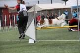 Callitris Girello Erminia -Shanti clears a hurdle.