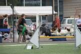 Kooikers in Finland 2013-06-169