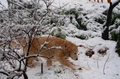 Kali first snow