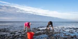 PRESENTATION: Bi-Valve Shellfish Harvesting @ Saaanich Silver Threads. | Victoria | British Columbia | Canada