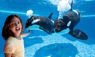 Viewing killer whales