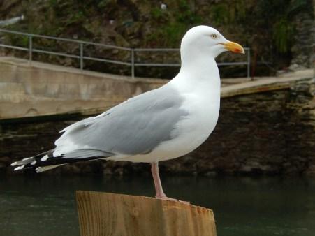 seagull-1261870_1920