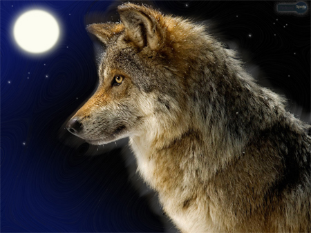 Kemper Crabb Defines The Problems With Lone Wolf Christianity