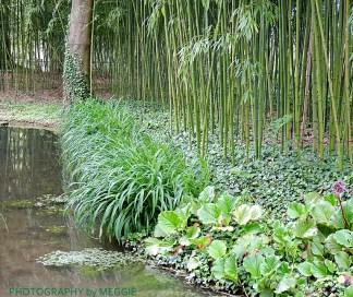 Monets trädgård -damm med bambu