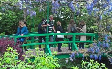 Monets trädgård - R på bron
