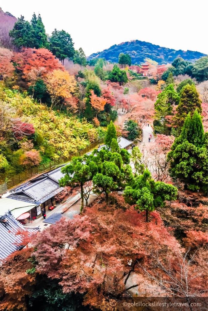 Beautiful autumn foliage at Kiyomizudera Kyoto