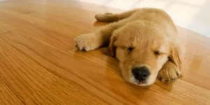 dog-sleeping-clean-floor