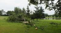 Nie mam na razie informacji, kiedy ruszymy z polem. Połowa uszkodzonych przez wichurę drzew jest już uprzątnięta, ale dopóki pole nie wyschnie (a przy czwartym greenie jest jezioro) nie możemy Was wpuścić. Zapowiadany na dzisiaj deszcz niestety nie pomoże. Gdy tylko pole będzie grywalne dam znać na stronie i Facebooku – wcześniej nie ma co dzwonić i przyjeżdżać. Tak wyglądało tee ósmego dołka