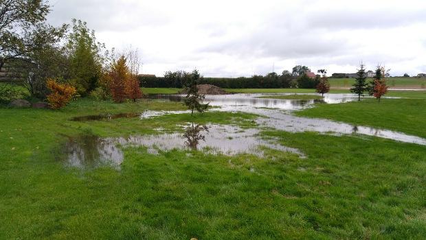 Pamiętacie te wszystkie miejsca na polu, z których tak ładnie zeszła woda i zaczynały schnąć? Są zalane ponownie. I kilka nowych.