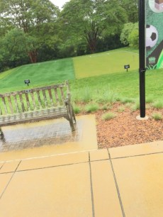 sport field grass_arboretum