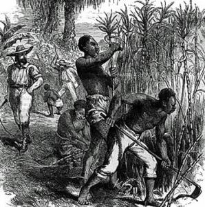 Slaves on a Caribbean sugar plantation