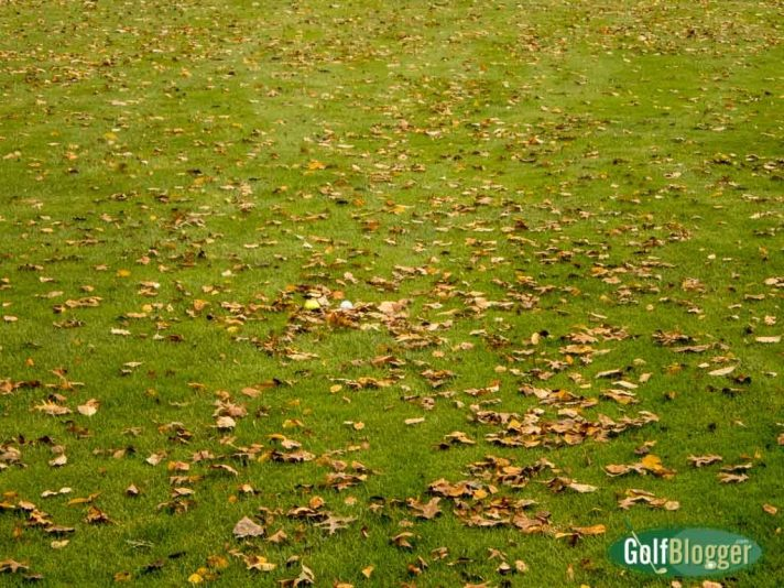 Golf Balls In Leaves