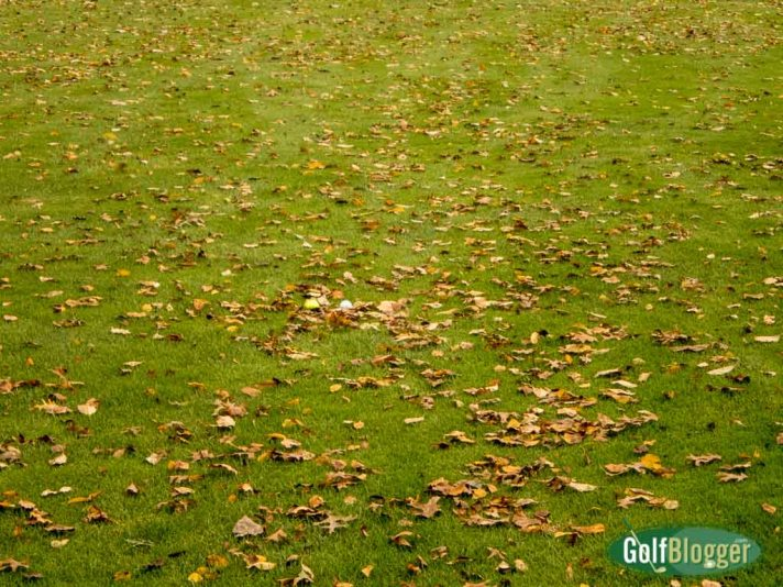 Golf Balls In Leaves