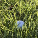 go golfing and improve your game with these tips - Tips On How To Improve Your Golf Swing